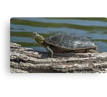 Painted Turtle Yawning Canvas Print