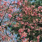 Sakura cherry blossom air by Eliza Sarobhasa
