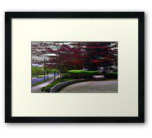 Japanese Maples Framed Print