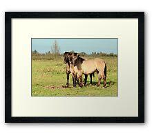 Three Boys - Konik Horse Framed Print