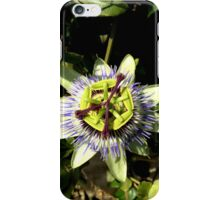Passion fruit iPhone Case/Skin