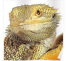 Bearded dragon Poster