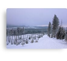 Pure nature in winter time Canvas Print