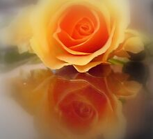 ROSE AND A MIRROR by Heidi Mooney-Hill