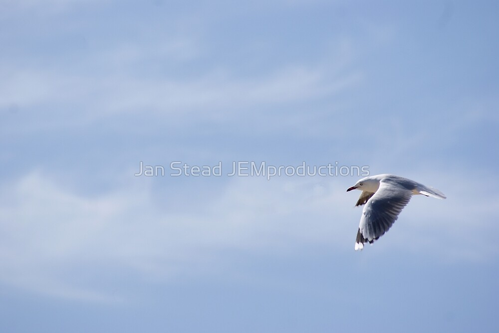 flying home by Jan Stead JEMproductions