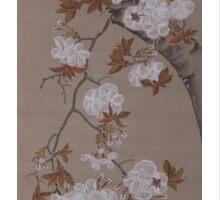 Hirose Kain - Cherry Blossoms . Japanese Still Life  Sticker