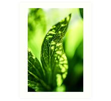 breath II  (green leaf) Art Print