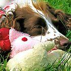 Sleepy Poppy.......... Dorset UK by lynn carter