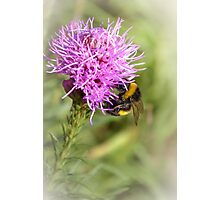 Summer time bumble-bee Photographic Print