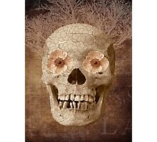Skull Vintage Collage Photographic Print