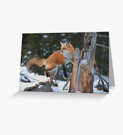 Red Fox On Stump Greeting Card