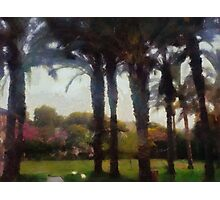 Among the palm trees Photographic Print