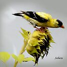 Sunflowers and Finches - 4 of 9 by Rosemary Sobiera