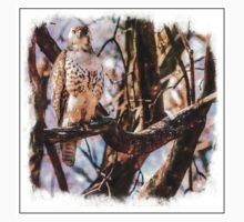 Red-tailed Hawk Baby Tee