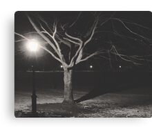 A Tree in One of New York's Public Parks Canvas Print