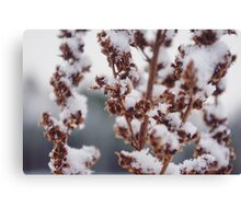 Frosted Flora Canvas Print
