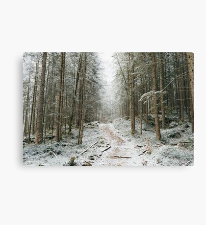 Trees trees trees landscape photography Canvas Print