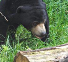 Black Bear Finds Fresh Wood Sticker