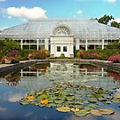 Greenhouse - The conservatory by Mike  Savad