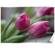 Pink tulips Poster