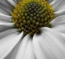 White Macro Daisy1 Sticker