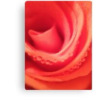 Pink Rose with dew. Canvas Print