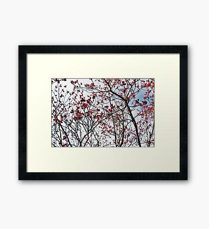 Sky Blossoms  Framed Print