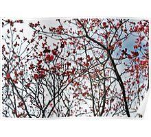 Sky Blossoms  Poster