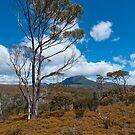Mt Pelion West, Overland Track, Tasmania by Erik Schlogl