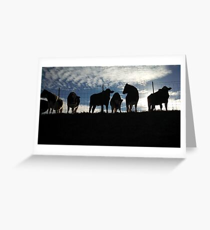 Cows Hanging Out. Greeting Card