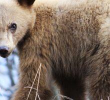 Blonde Bear Sticker