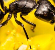 Ant close up Sticker