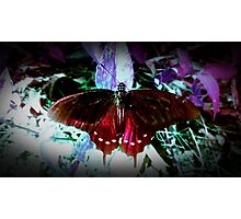 Crimson Butterfly Photographic Print