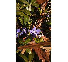 Hidden Flower. Photographic Print