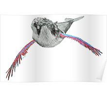 Humpback whale with wings (red, light blue) Poster