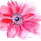 Anemone de Caen by Ruth S Harris