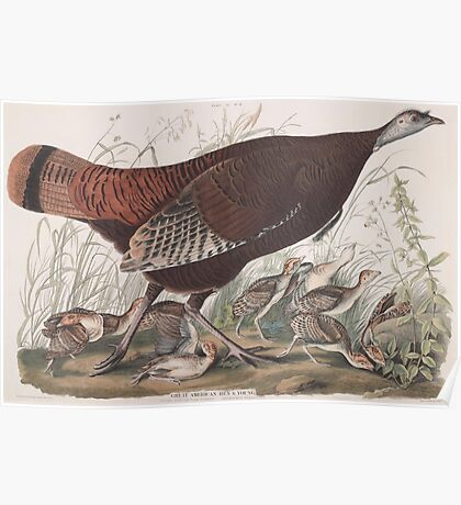 John James Audubon - Great American Hen & Young. Vulgo, Female Wild Turkey. Meleagris gallopavo.1827 Poster