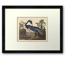 John James Audubon - Louisiana Heron 1834 Framed Print