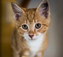 Cutest kitten! by Roger  Mackertich