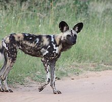 The Painted Dog by KAt-dan-Painter