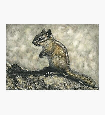 Chipmunk: On the Rocks Photographic Print