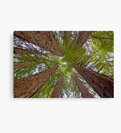 Colossal Canopy Canvas Print