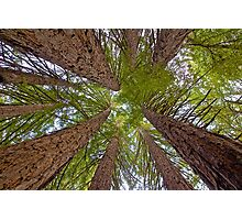 Colossal Canopy Photographic Print