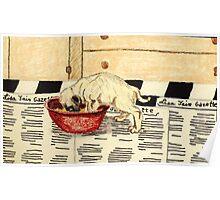 Hungry Pug Poster