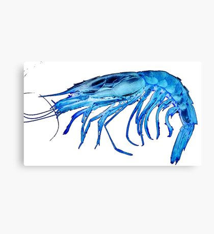 X-ray shrimp 2.0 PNG Canvas Print