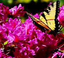 Tiger Swallowtail on Azalea Sticker