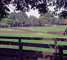 Equine Pasture by John Schneider