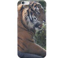 Hear me roar...! iPhone Case/Skin