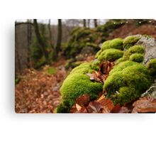 The fluffy furry forest Canvas Print