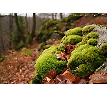 The fluffy furry forest Photographic Print